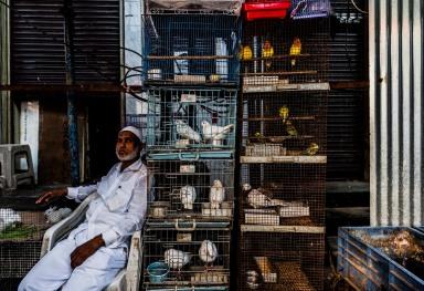 THE MAHATMA JYOTIBA PHULE MANDI MARKET IN MUMBAI